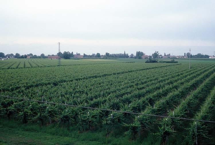 Avigere, il progetto siciliano per la viticoltura di precisione
