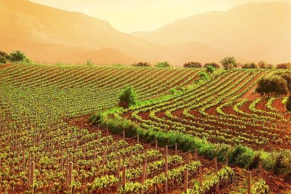 Il boom dell'agricoltura in Italia. Porta guadagno, dà lavoro, esporta il made in Italy nel mondo