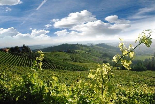 Signori del vino su Rai2. La storia della viticoltura italiana di nuovo in tv, attraverso dieci grandi produttori. Si comincia con Angelo Gaja
