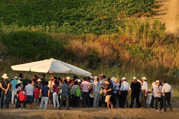 La Sicilia di Mandrarossa Vineyard Tour: tutti protagonisti della vendemmia di Menfi