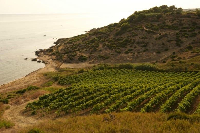Vendemmia 2014: dove nasceranno i grandi vini? 2. Sicilia