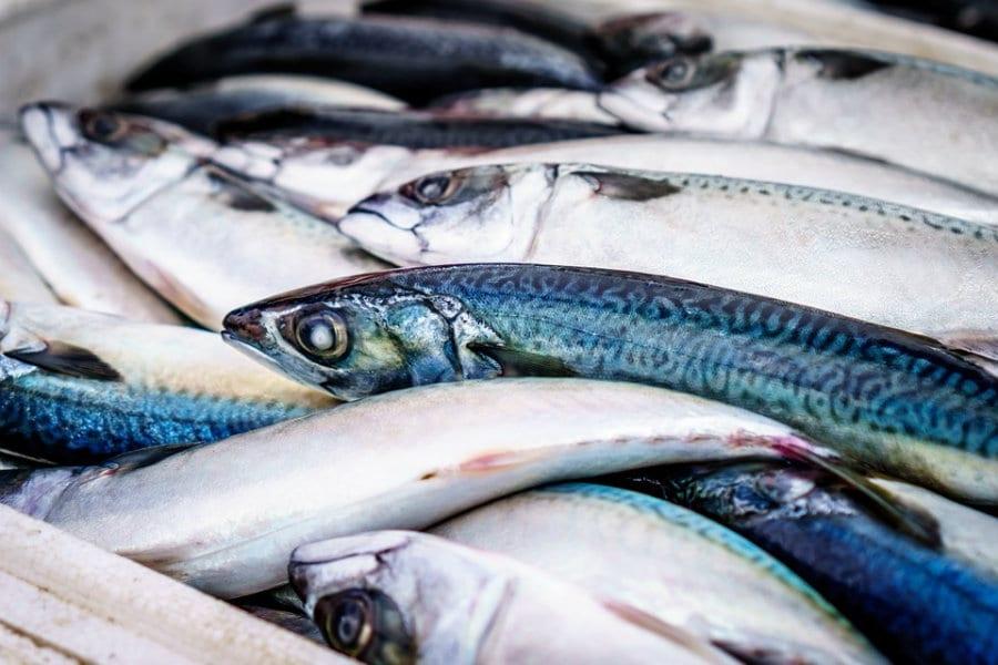 Si può mangiare pesce senza distruggere il mare? Le risposte di Gianfranco Pascucci
