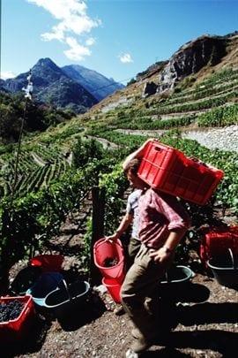 Giornata Internazionale della Montagna: in Italia un'azienda agricola su tre è in aree montane. E previene il dissesto