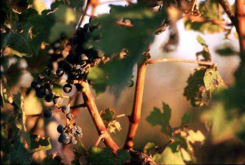 Anteprime vino. Tutti i rossi della Campania dal 6 al 11 marzo