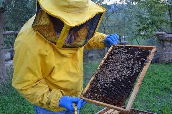 Nuovi progetti sostenibili per una Milano moderna: apicoltura in Parco Sempione e recupero di spazi multifunzionali nel Parco Agricolo Sud