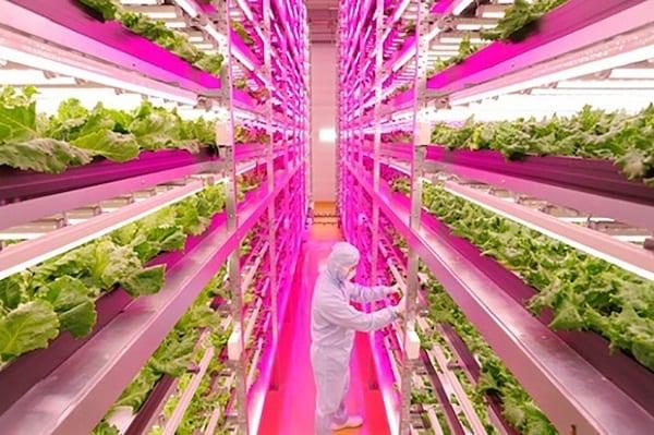 Se il cibo non basta più: nei prossimi 40 anni ne servirà più che negli ultimi 10mila. Nuovi capitali per scommettere sullo sviluppo agricolo. In Giappone l'azienda più produttiva