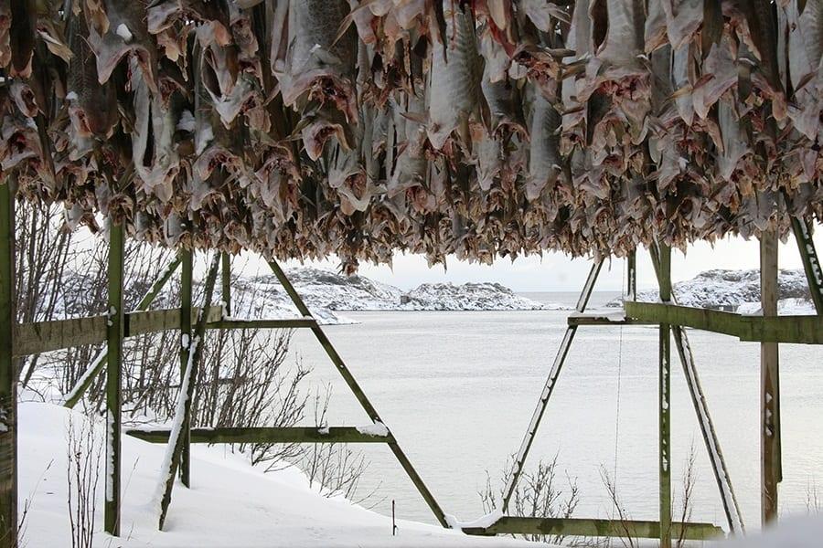 Dalle isole Lofoten a Vicenza: tutta la storia del bacalà alla vicentina
