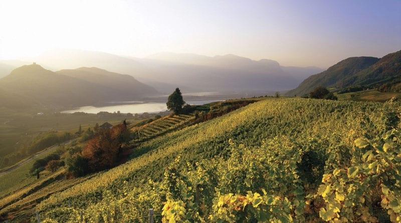 Viticoltura in Alto Adige: Caldaro ed Erste&Neue, ok alla fusione. Investimento da 10 milioni di euro