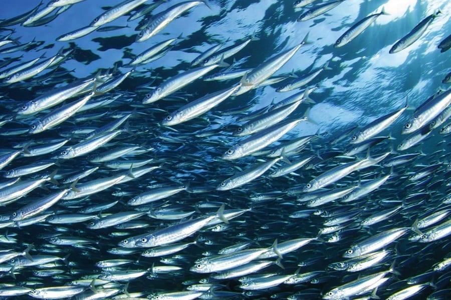 Venti chef insieme per Oceana. A San Sebastian l'incontro per denunciare l'overfishing. Per l'Italia Massimo Bottura