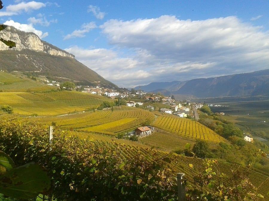 Cortaccia Rossa 2017: i rossi dell'Alto Adige sfidano i grandi vini di Bolgheri