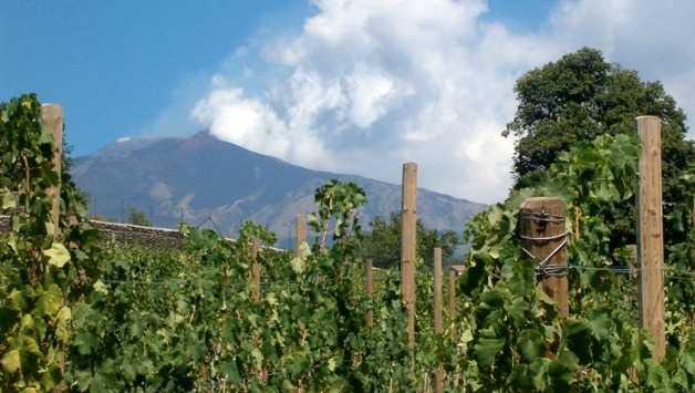 Vulcania: i Vini del Vulcano. Quando vignaioli e consorzi si uniscono