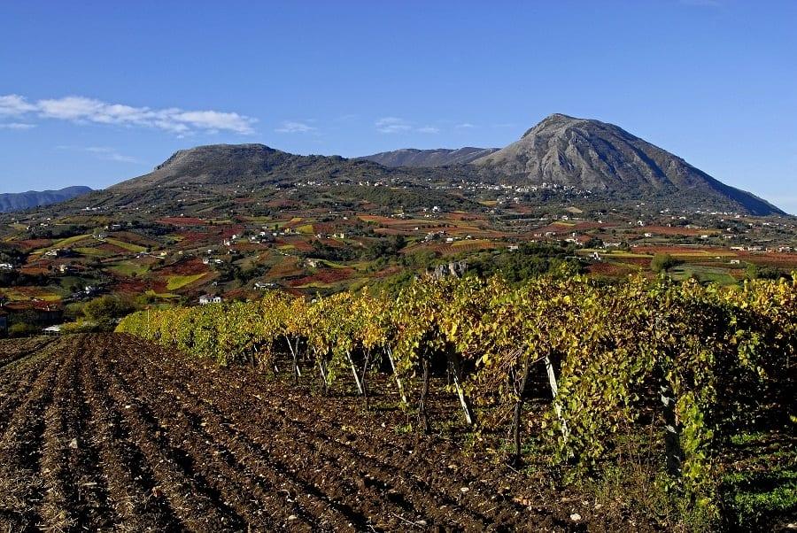 10 vini per una regione. La Campania
