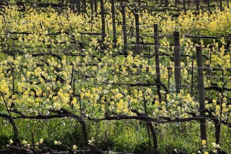 Sostenibilità, l'ultima sfida nel mondo vino