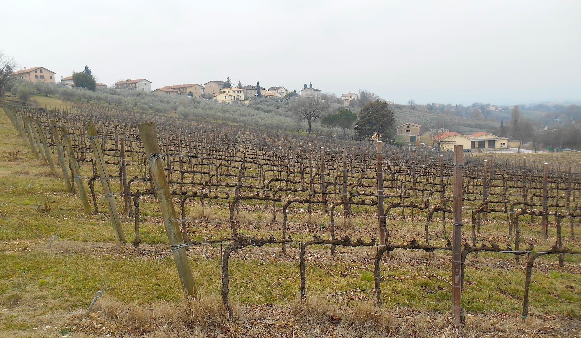 Montefalco Sagrantino: dall'Anteprima 2019 al futuro del vino