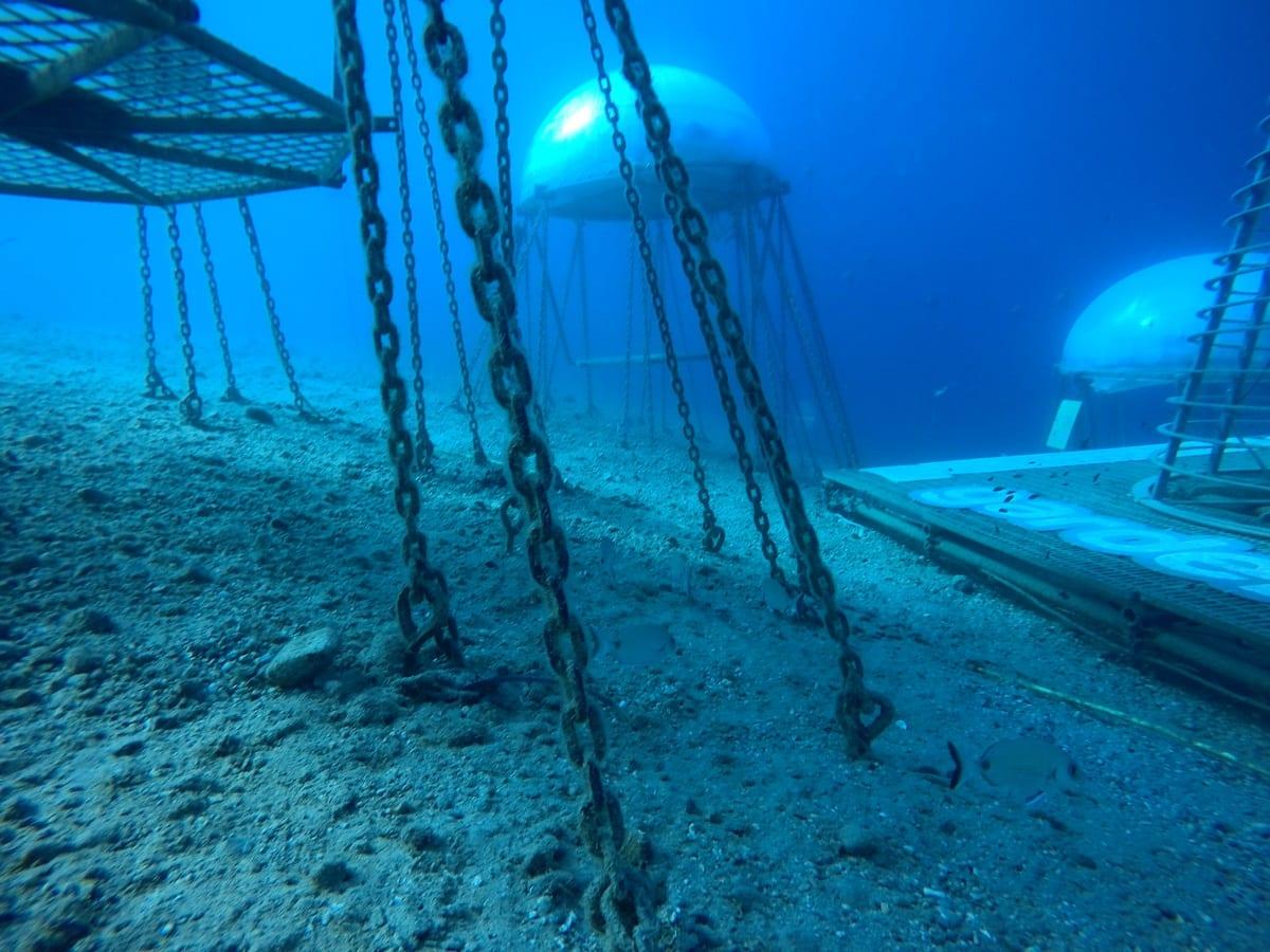 Nemo's Garden: l'orto subacqueo è realtà