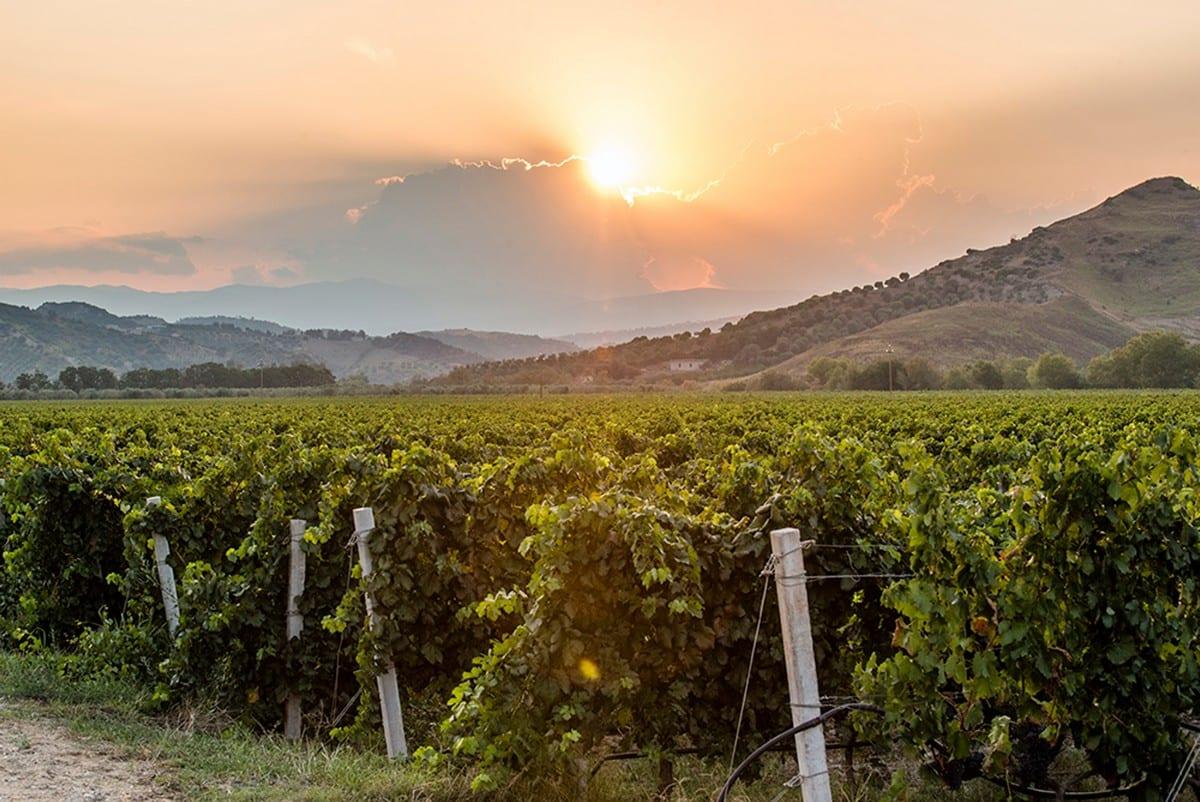 Nel segno del vitigno gaglioppo. Le nuove etichette di Librandi di Cirò Marina