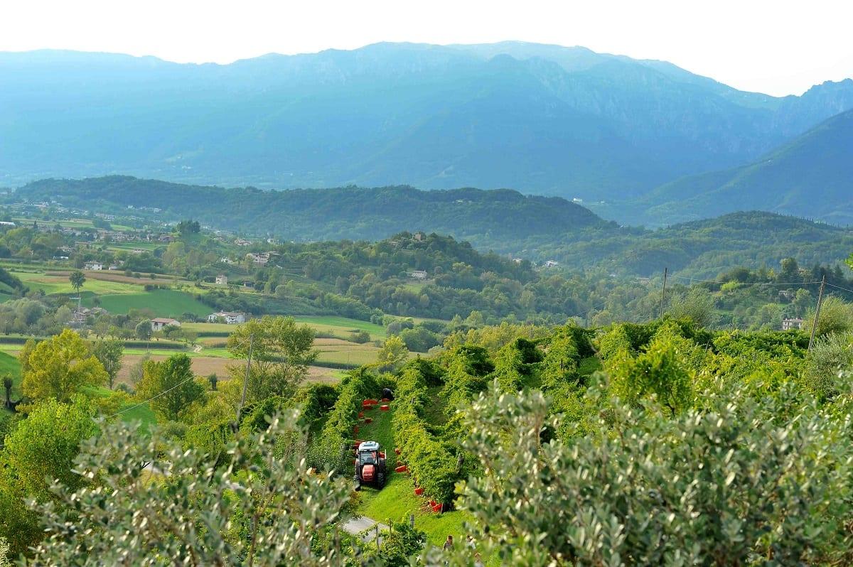 Veneto, dalla sovrapproduzione al rischio svalutazione