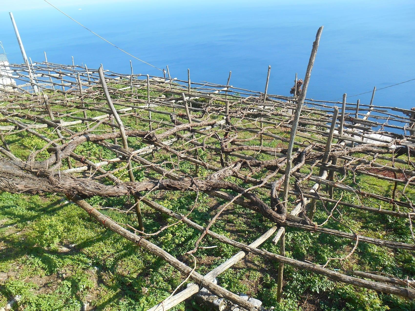 Campania Stories 2019 report. Alla scoperta della grande viticoltura campana